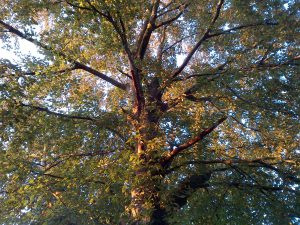 Baumkontrolle Schadsymptome Baumkataster Baumkontrolleur Zwiesel Faeule