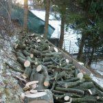 Brennholz nach einer Baumfällung