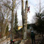 Zerlegung eines gefällten Baums