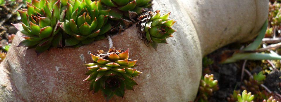 Gartenzubehör Terrakotta